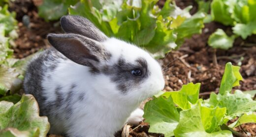 pet-friendly home improvements - rabbit
